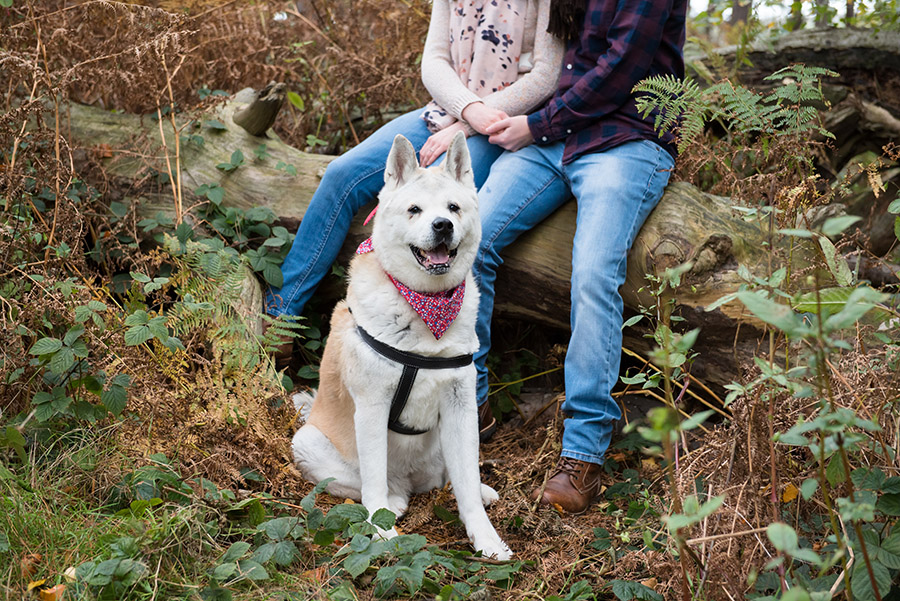 family and dog photography cannock chase